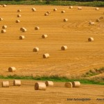 Farming Law